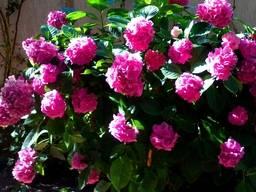 Цветы в отеле МАШУК
