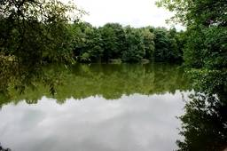 Озеро в парке Измайловский