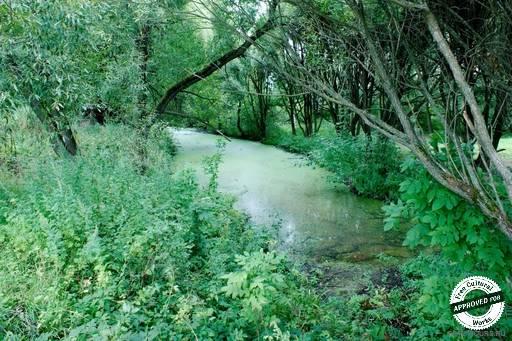 Измайловский парк. Заросший водоем со стоячей водой