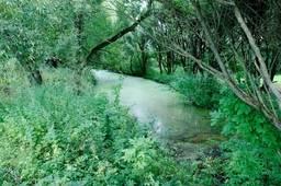 Заросший водоем со стоячей водой