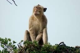 Остров обезьян - KOH PET