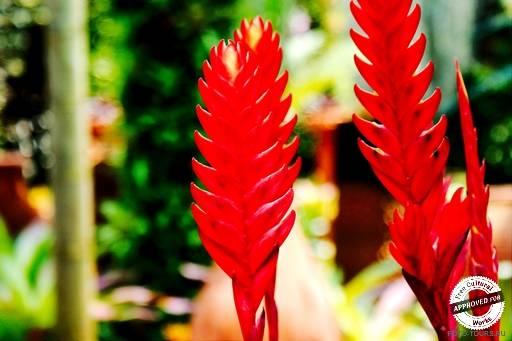 Цветочный рай мадам Нонг Нуч.