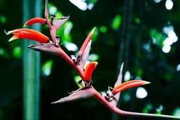 Цветочный рай мадам Нонг Нуч