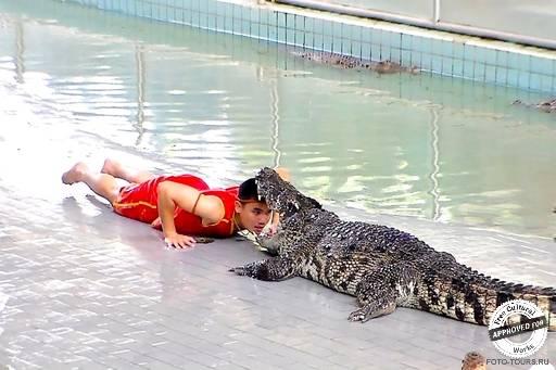 Крокодиловая ферма.
