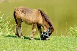 мини лошадки