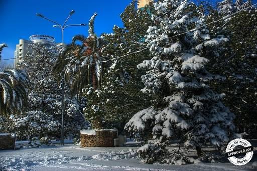Зимний отдых в Сочи. Сочи. Зима