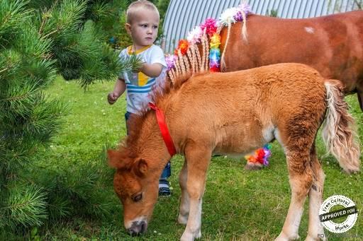 В гости к минилошадям. мини лошадки